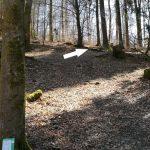 Discgolf Bad Fredeburg Sauerland